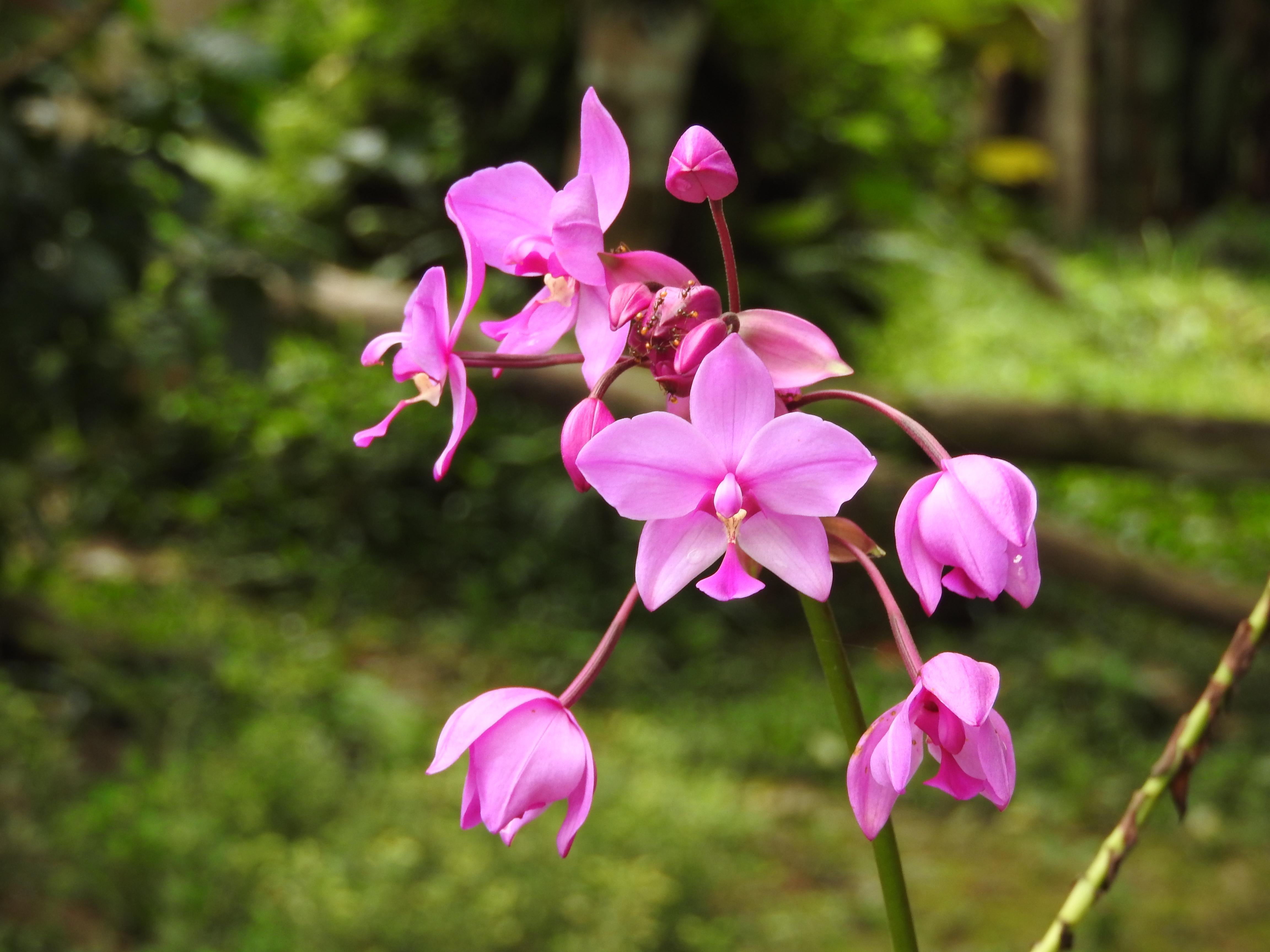 Flor del bosque muy húmedo tropical