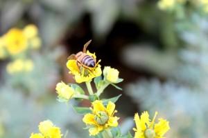 abeja+