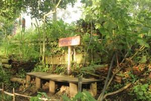 Viviendo con un jardín
